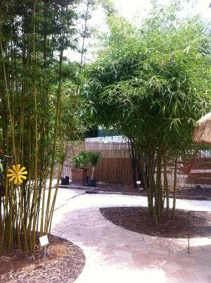awesome bamboo.JPG