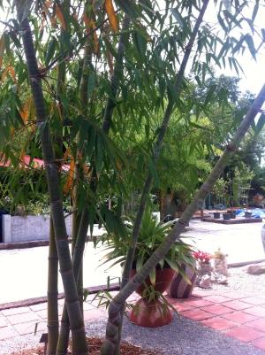 Twisted bamboo.JPG